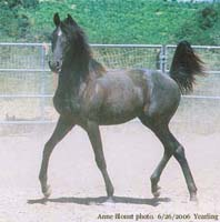 Black Destiny, 2005 Colt
