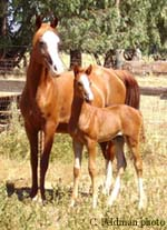 One of the 2006 foals.